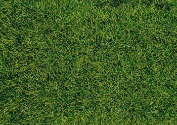 Decovlies Wildgras Moorboden, 28 x 14cm - Heki Faserhöhe 5-6mm | günstig bestellen bei Modelleisenbahn Center  MCS Vertriebs GmbH